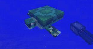 我的世界海龟即将加入 Minecraft新生物添加已确定
